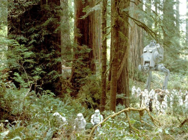 I got: Endor! You got Endor! Although this is technically a moon, you'll love it here! You love nature and can be kind of shy, but you are more than capable of taking care of yourself! From the lush trees to the fuzzy ewoks, this planet is perfect for you!