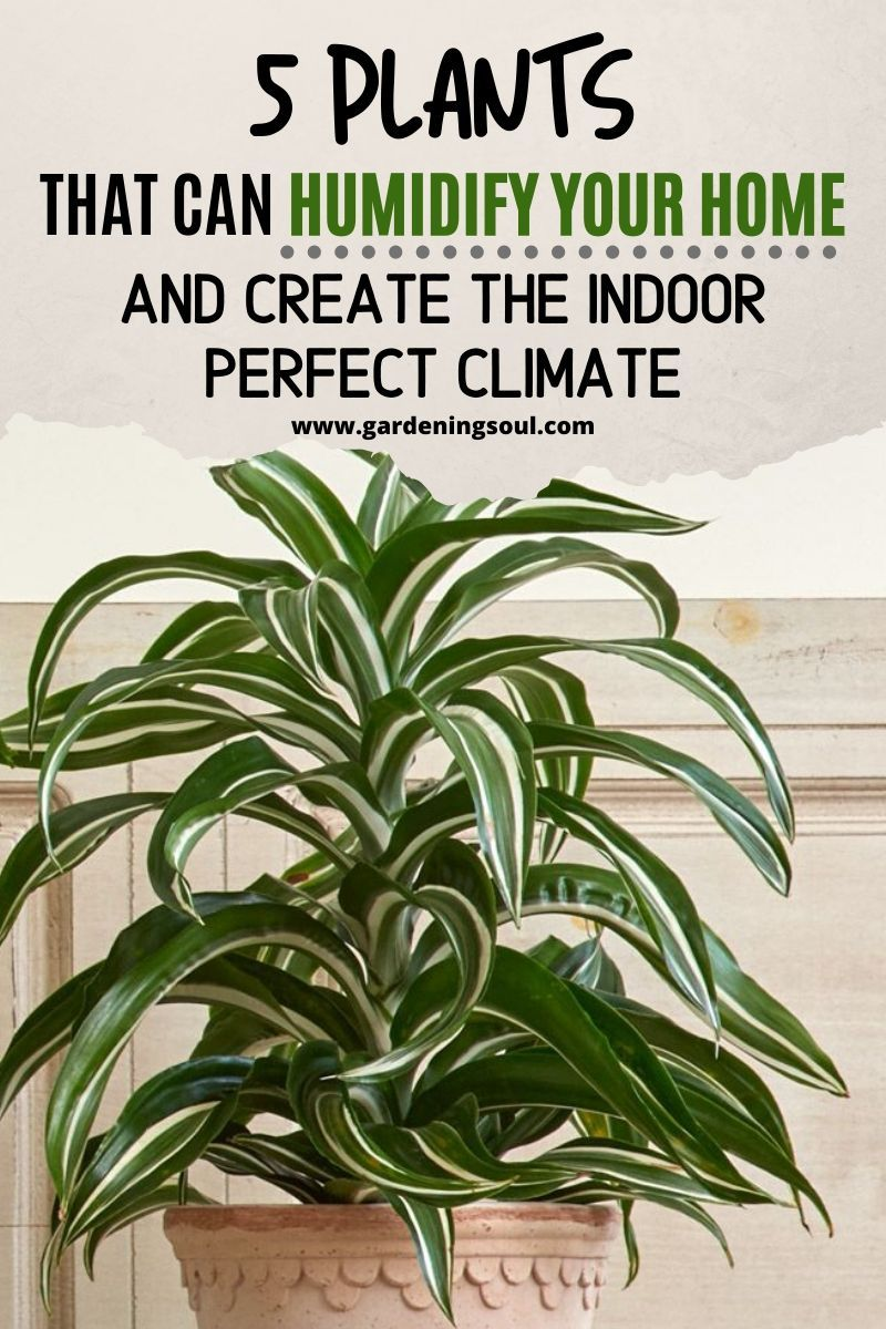 5 Plants That Can Humidify Your Home And Create The Indoor Perfect Climate is part of Plants, Perfect climate, Indoor plants easy, Indoor plants low light, Best plants for bedroom, Indoor plants clean air - Has it ever happened to you to get uncomfortable in your own home  Maybe the air was too dry, or overly humid, or maybe it felt like you are surrounded by an old dustfiller air filter  Either way, the wrong kind of air can cause many health issues  Luckily, if you have the right plants […]