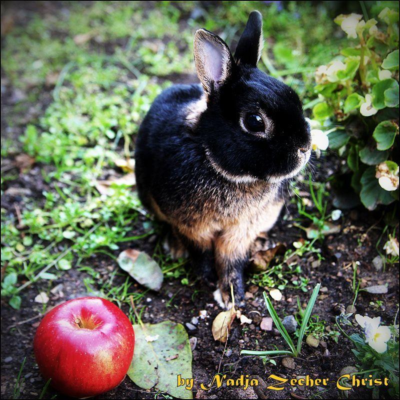 Lenny The Dwarf Rabbit Lenny Das Zwergkaninchen Zwergkaninchen Kaninchen Kleine Tiere