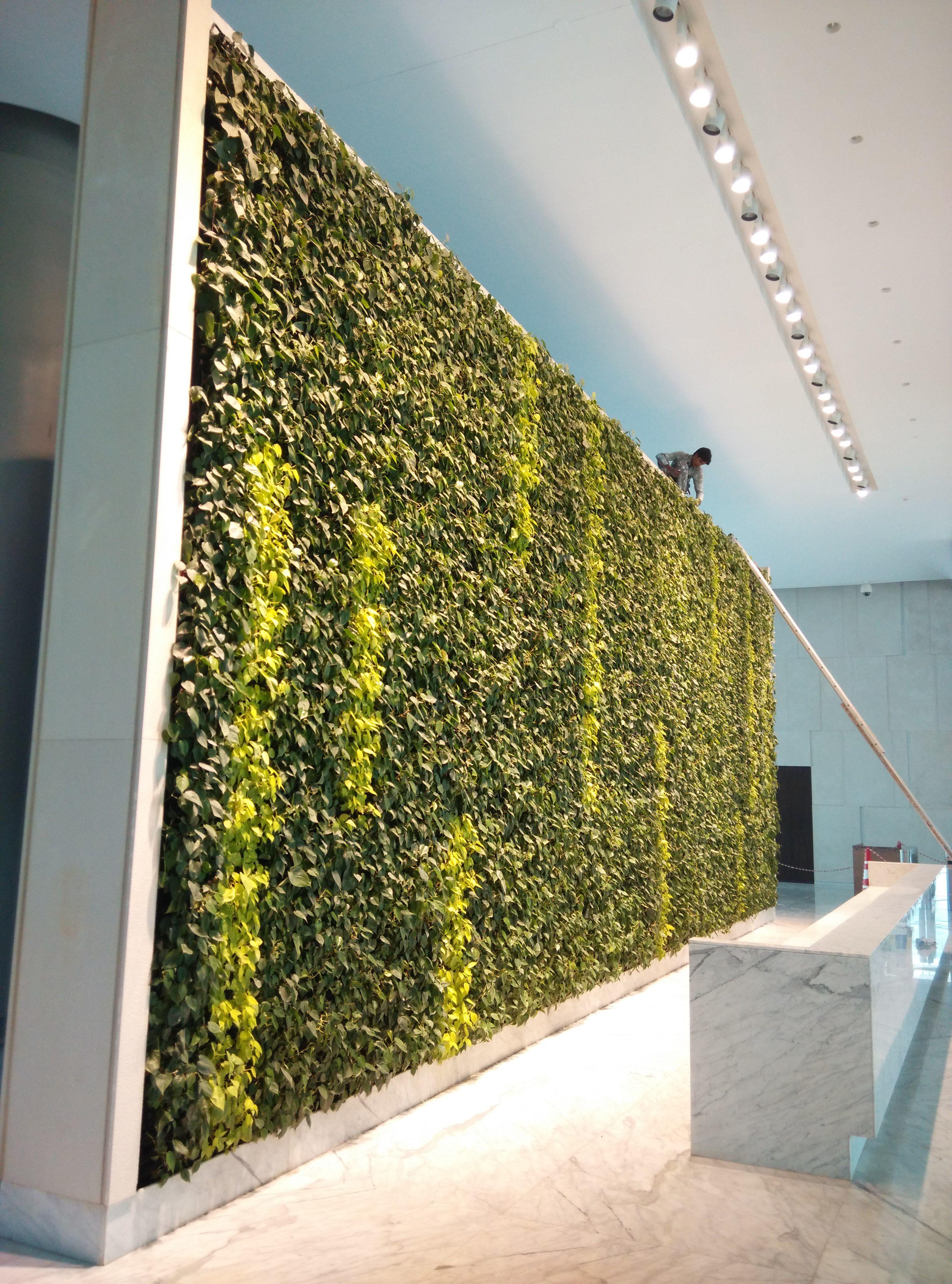 elt india indoor green wall in mumbai vertical gardens