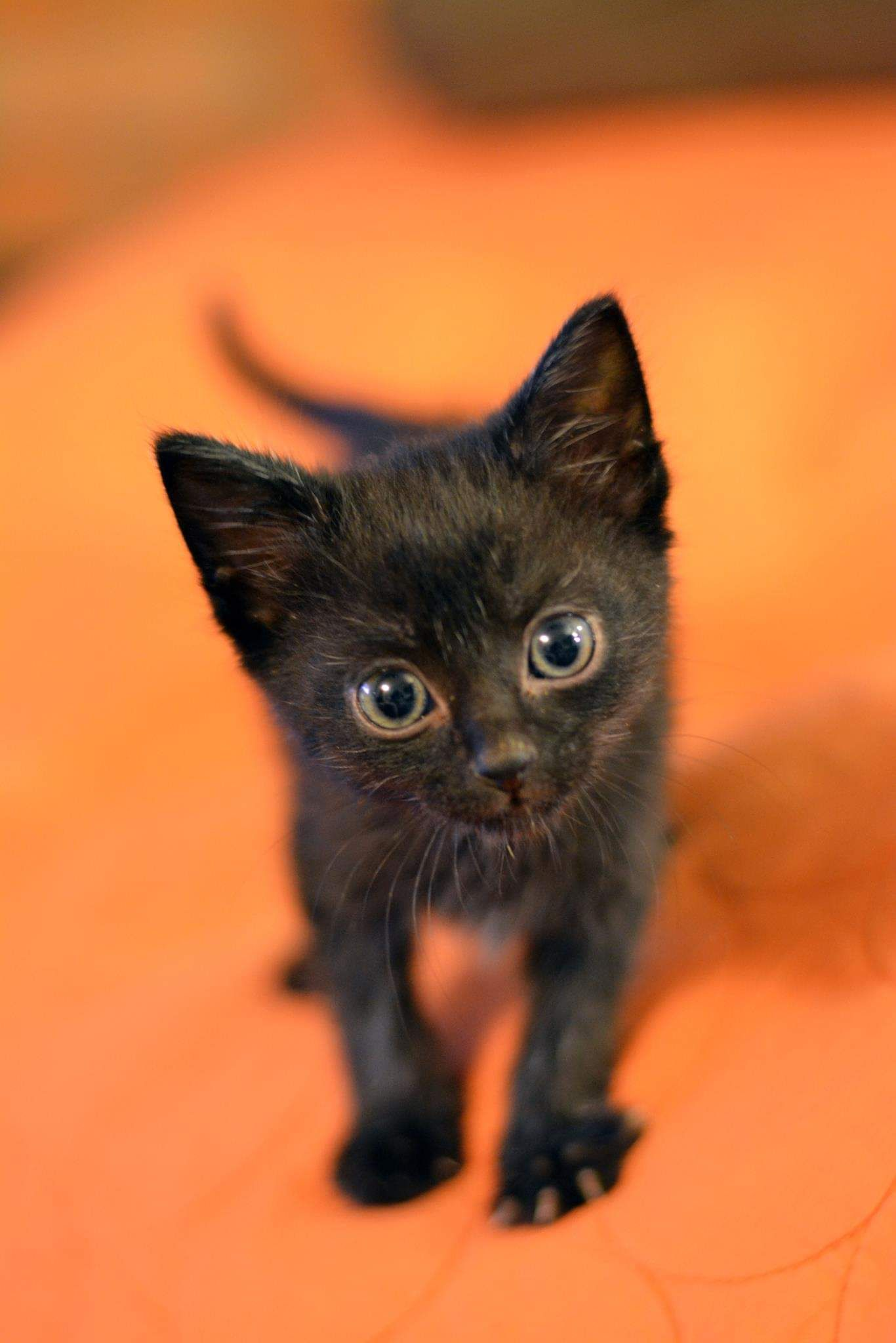 Soot S Baby Photo In Honor Of His 2 Year Foster Fail Adoption Anniversary Cats Kittens And Puppies Kittens Cutest