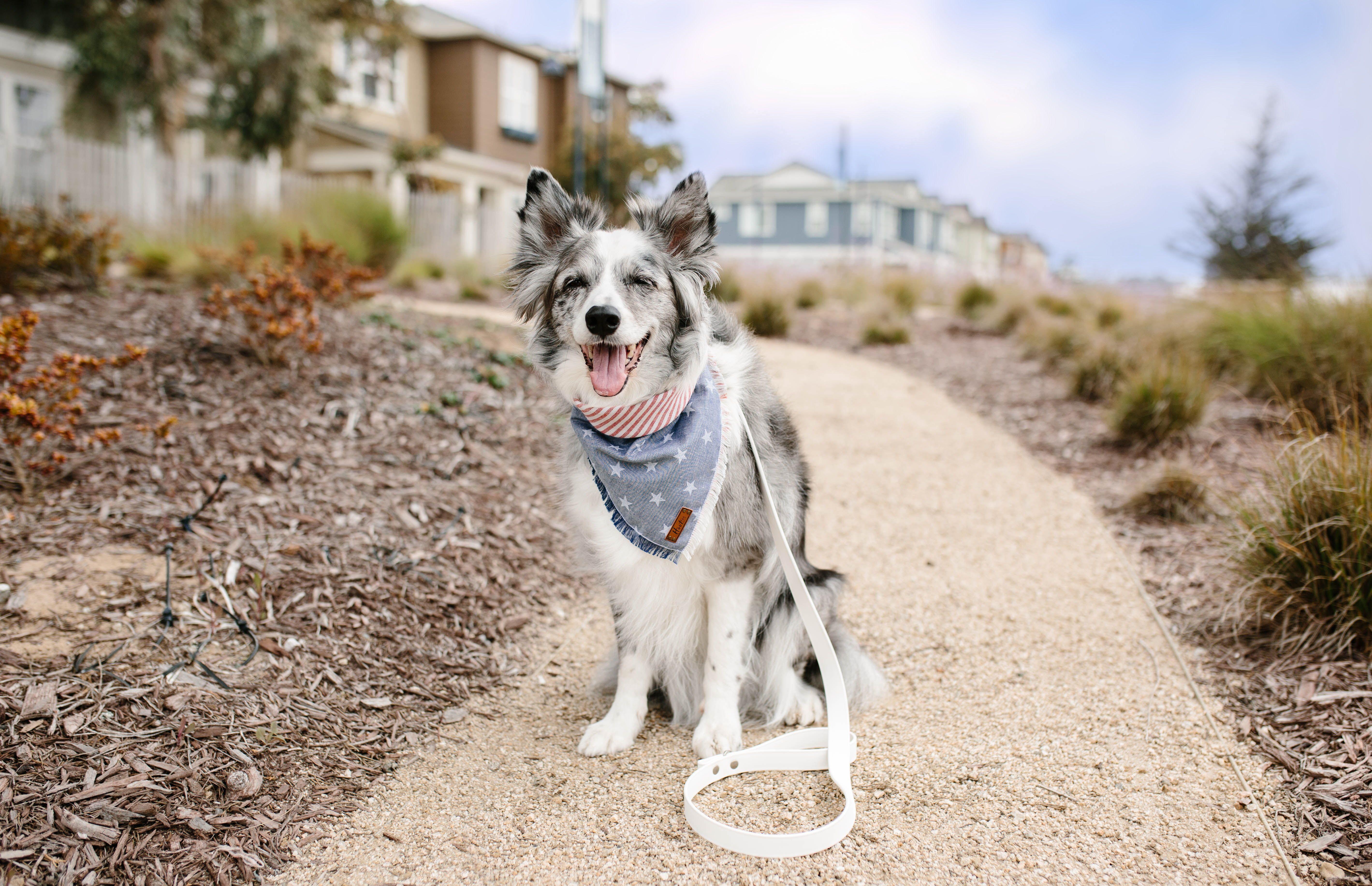 Hoot And Co Pet Bandana Dog Bandana Plaid Bandana Frayed Dog