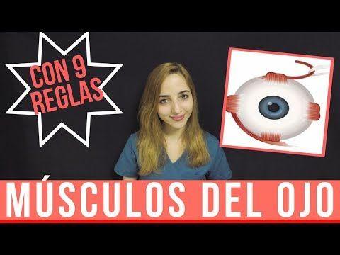 MÚSCULOS DEL OJO ANATOMÍA | MÚSCULOS EXTRAOCULARES - YouTube | Info ...