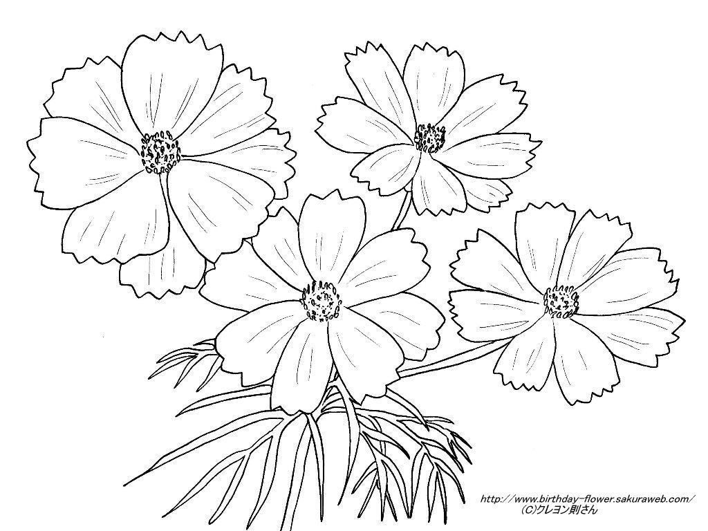 無料の印刷用ぬりえページ 無料ダウンロード コスモス 塗り絵 Flower Tattoo Lotus Flower Tattoo Coloring Sheets