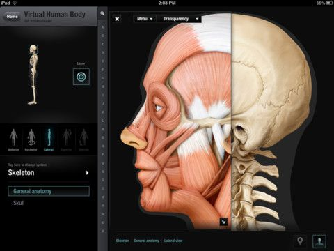 Virtual Human Body, definitely the best app for iPad to explore the ...