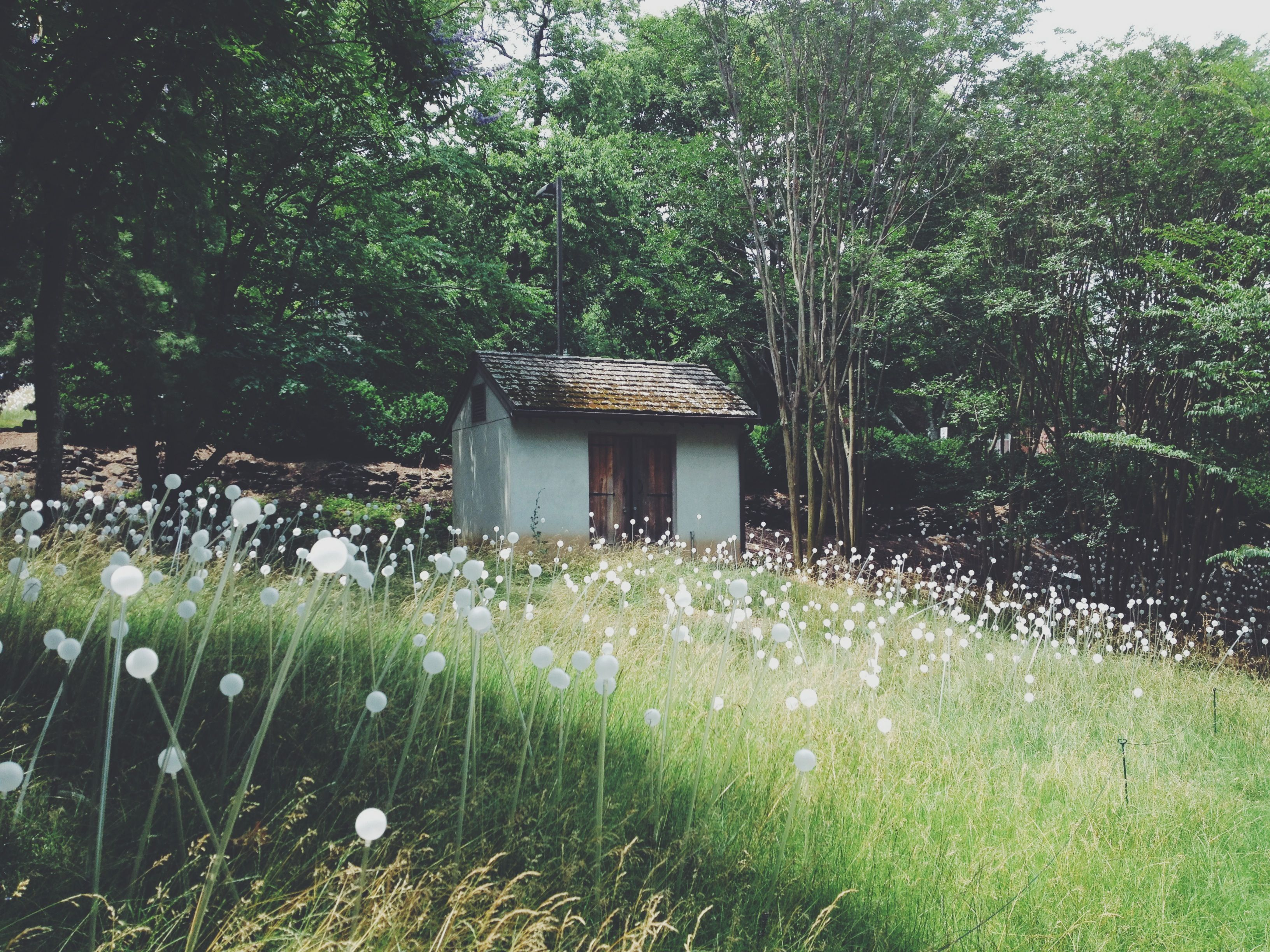 Bruce marno at cheekwood trips pinterest landscape