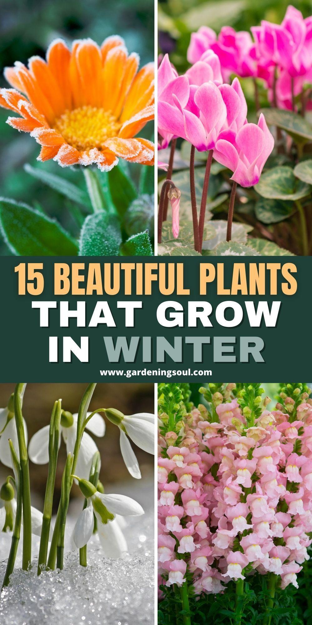 15 Beautiful Plants That Grow In Winter Winter Flowers Winter Flowers Garden Winter Garden