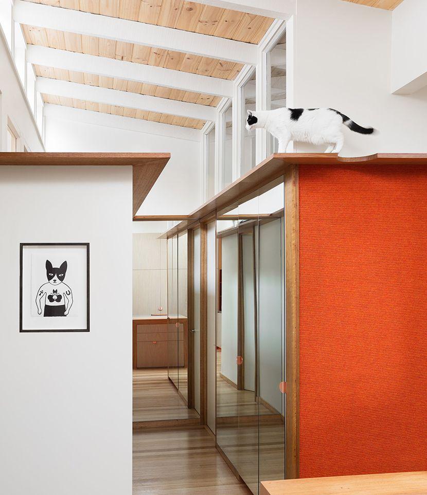 wowowa-architecture-casa-de-gatos-interiores-australia-catalogodiseno (5)