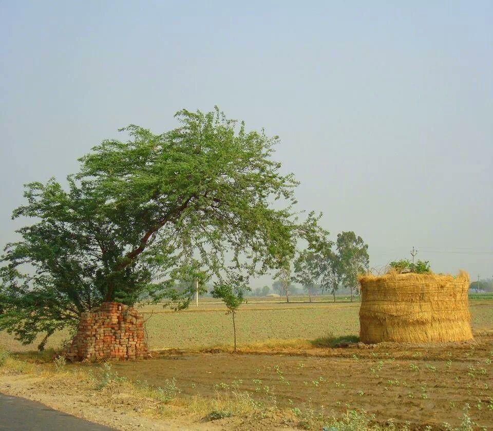 Punjab Pakistan   Village photography, Village photos, Village