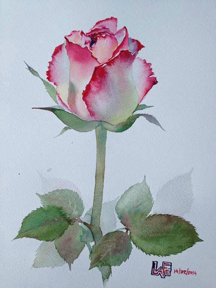Watercolor Rosebud By Lafe Flower Painting Watercolor Flowers