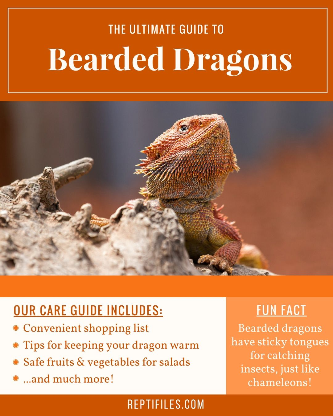 The Ultimate Bearded Dragon Care Guide Bearded dragon