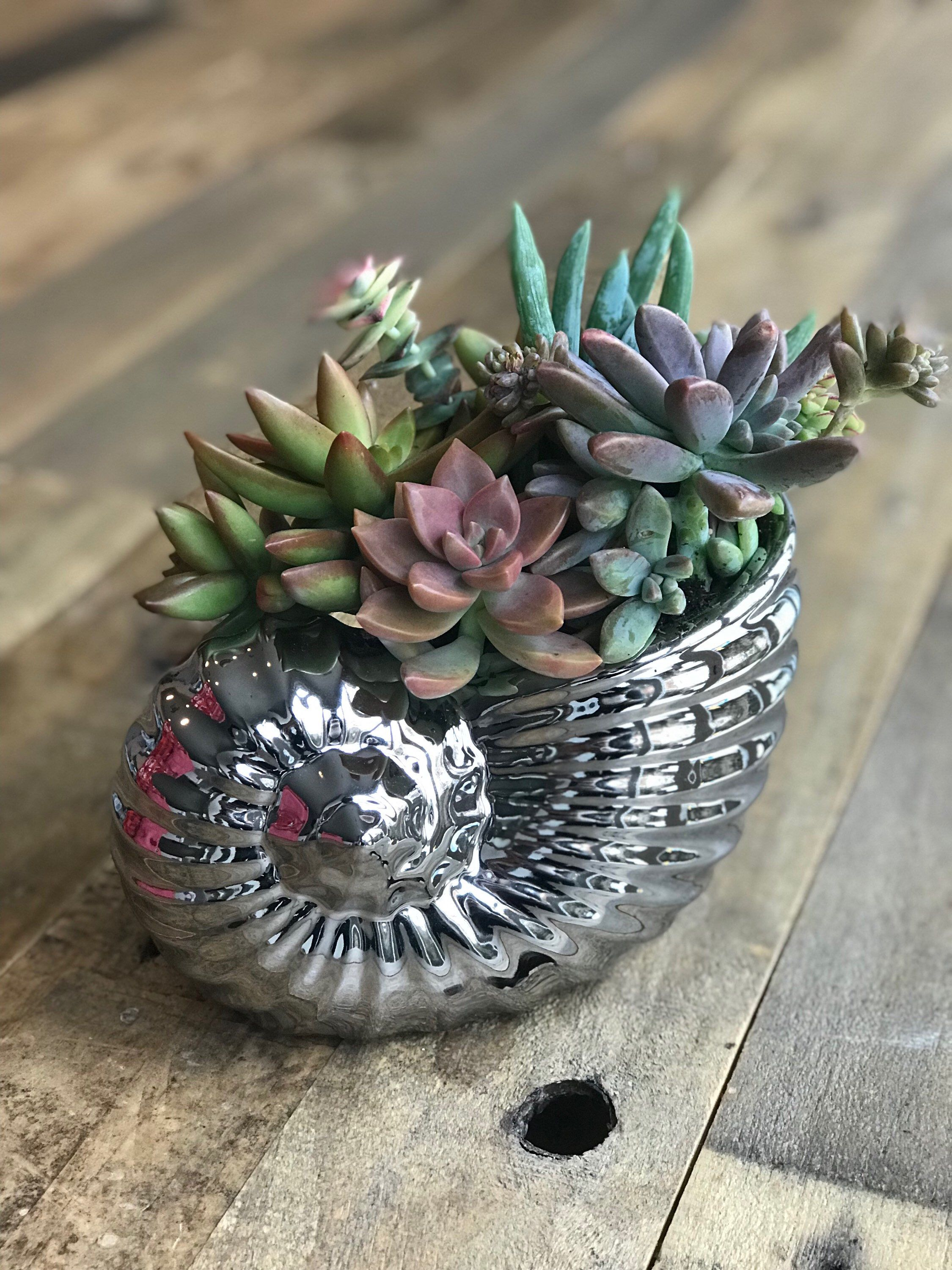 Live Succulent Arrangement Perfect Housewarming, Birthday, Anniversary, Mothers Day Gift Metallic