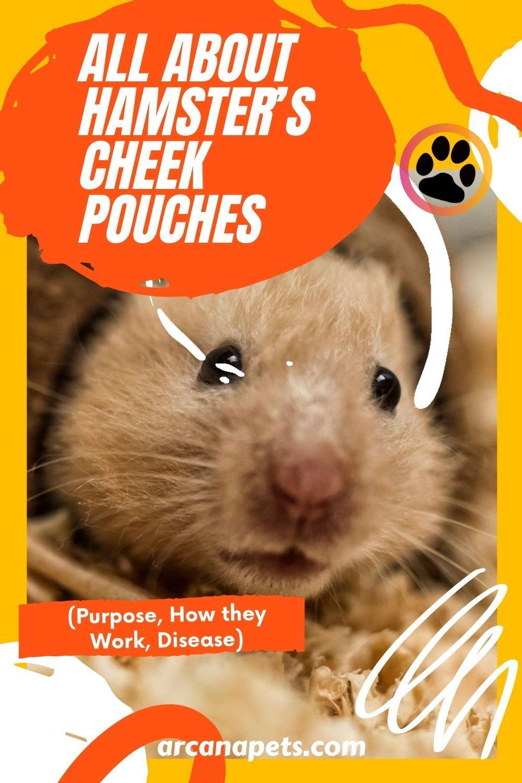 a420f2f1a5a4c7875a75b0eec9ef596c - How To Get Food Out Of Hamster S Cheeks