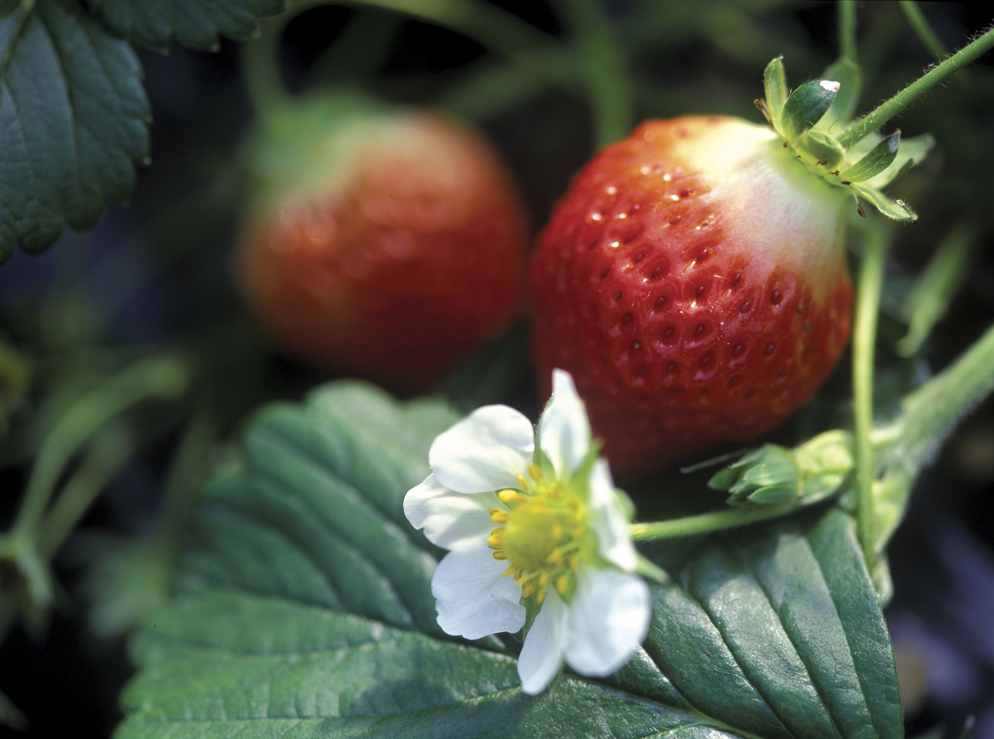 The best fruits and vegetables to plant anywhere three days