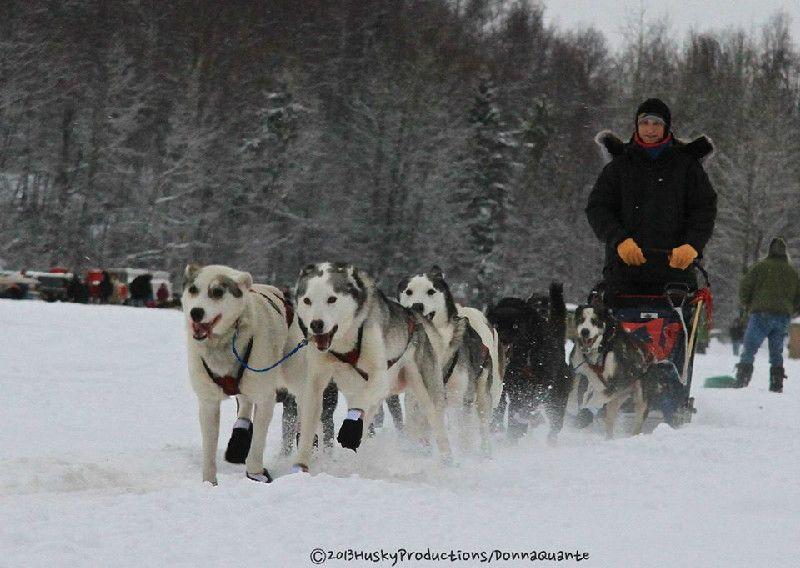 2014 Iditarod Trail Kennel A Team Training Dogs Sled Animals