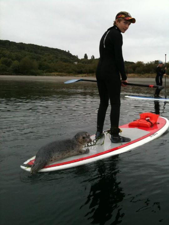 3f8f27e1c3 This is why Seattle rules... during a paddle board yoga class a baby ...
