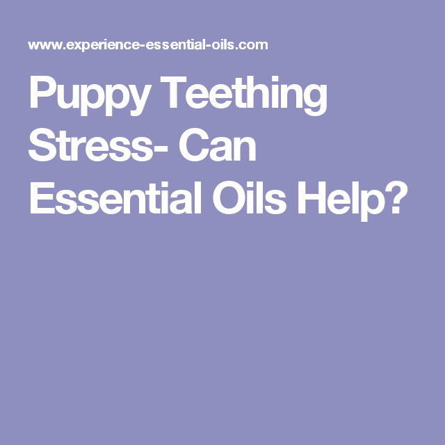 Puppy Teething Stress Can Essential Oils Help Puppy Teething Essential Oils For Teething Essential Oils