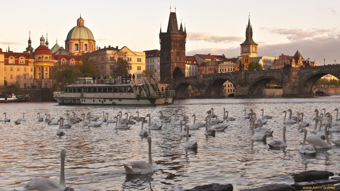 Обои Лебеди, чехия. Города foto 10