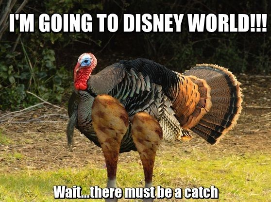 Turkey Leg Recipe Disney Recipes Funny Thanksgiving Memes Funny Thanksgiving Thanksgiving Meme