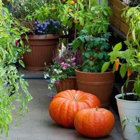 Taras Jesienny Pumpkin Vegetables