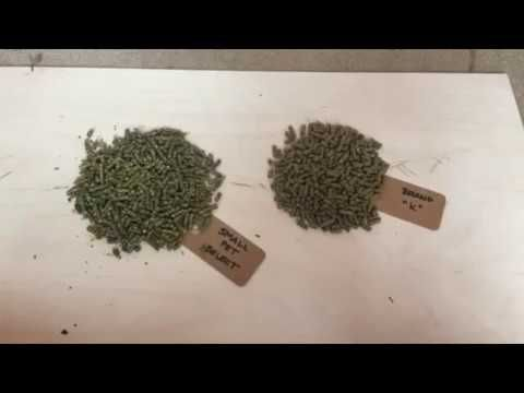 Why Small Pet Select Pellets The Best Small Pets Pets Pellet