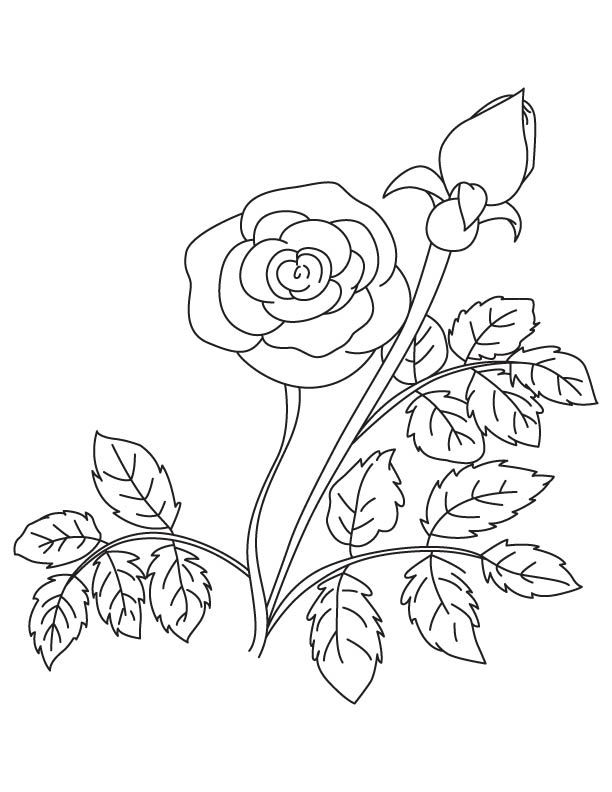 Rose With Bud Coloring Page