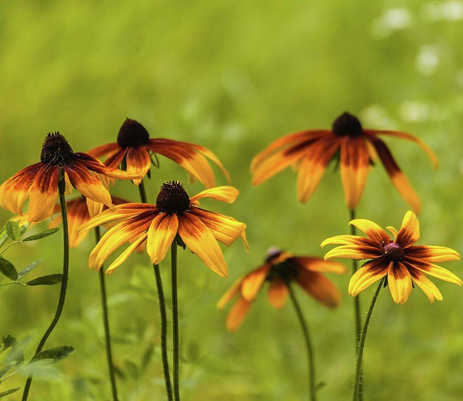 Anna Matveeva Photograph - Garden Flowers Yellow by Anna Matveeva     #AnnaMatveeva #spring #yellow # flowers #FineArtPhotography  #ArtForHome #FineArtPrints #ArtForHome #Flowers