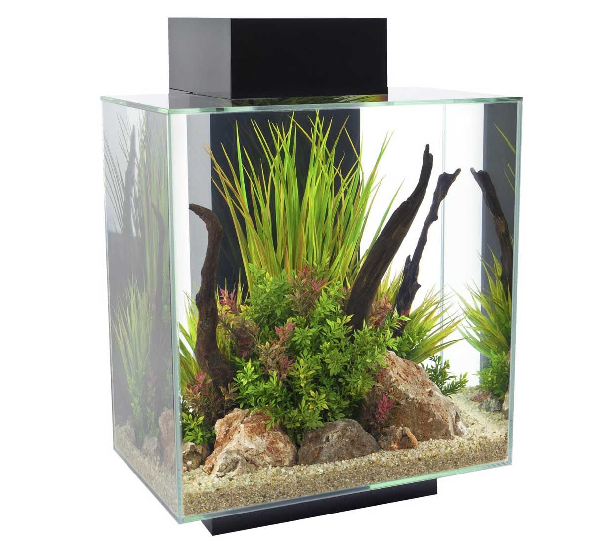 Fish for aquarium online - Buy Online Fluval Edge Aquarium Set Led Black 46ltr At Online Fish Shop India Http