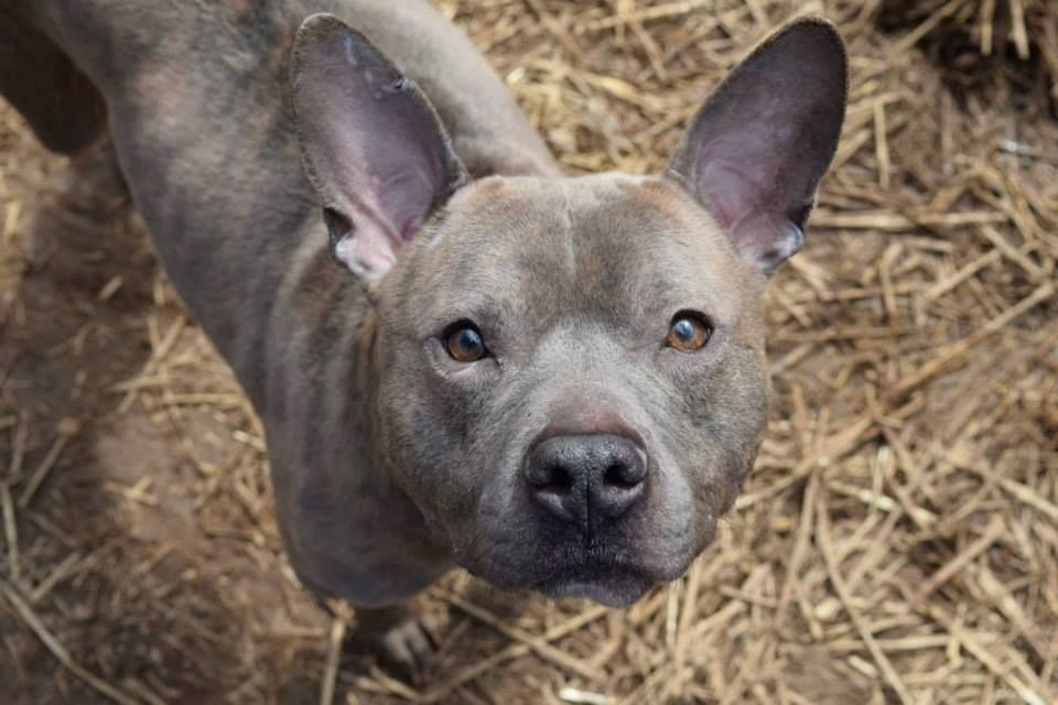 URGENT! PLACEMENT NEEDED BY 7PM MONDAY 3/23! Urgent