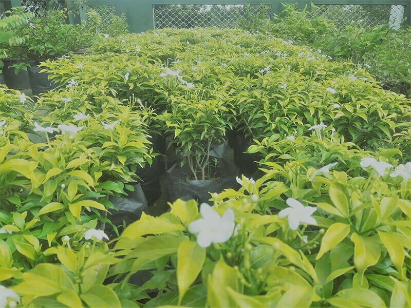 Plant Nursery Location Polwatta Plants Sri Lanka