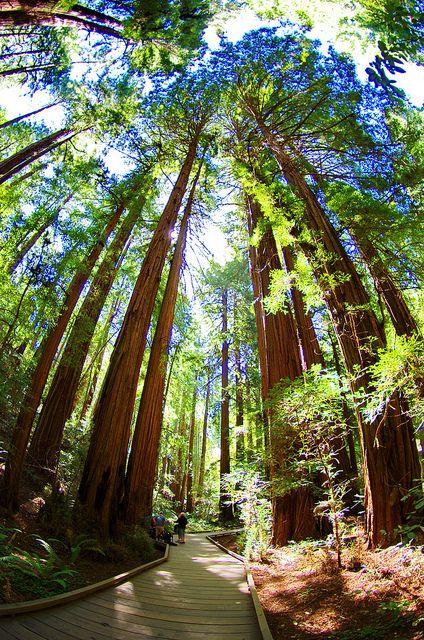 California Muir Woods  [per previous pinner]