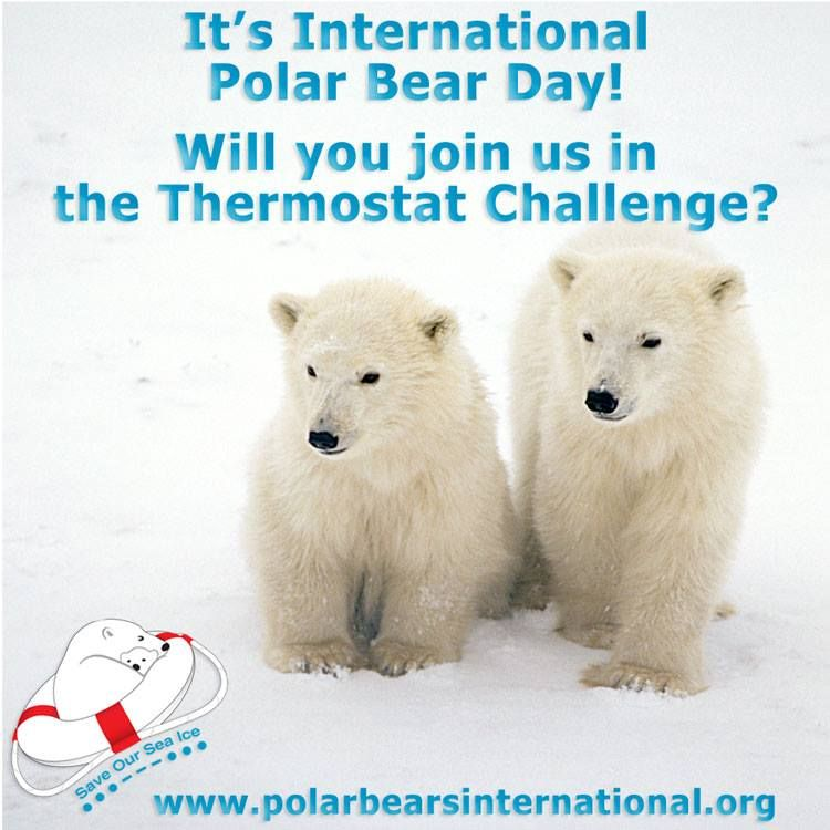 It's International Polar Bear Day! Join us and Polar Bears International in making it a community event with the Thermostat Challenge Toolkit.
