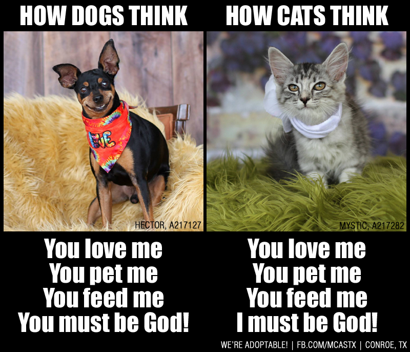 Cats vs. Dogs it's all about perspective, LOL. Cat vs