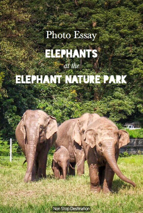 photo essay elephants at the elephant nature park elephant  photo essay elephants at the elephant nature park non stop destination
