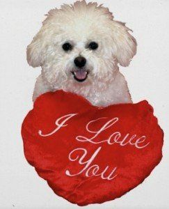 Hillspet Love Your Pet And Help Them Lose The Weight Bichon Bichon Frise Dogs Bichon Frise