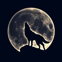 Photo of Howling wolf, full moon – Buy this stock illustration and explore similar illustrations at Adobe Stock