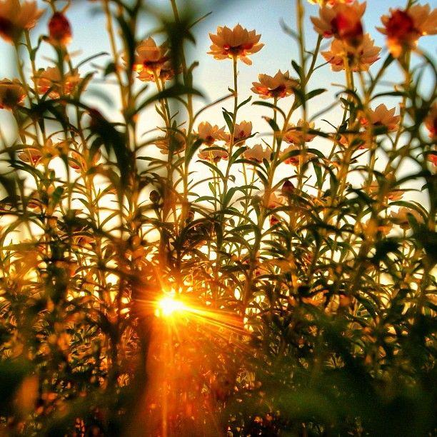 "@moonlightice's photo: ""Sunset today"""