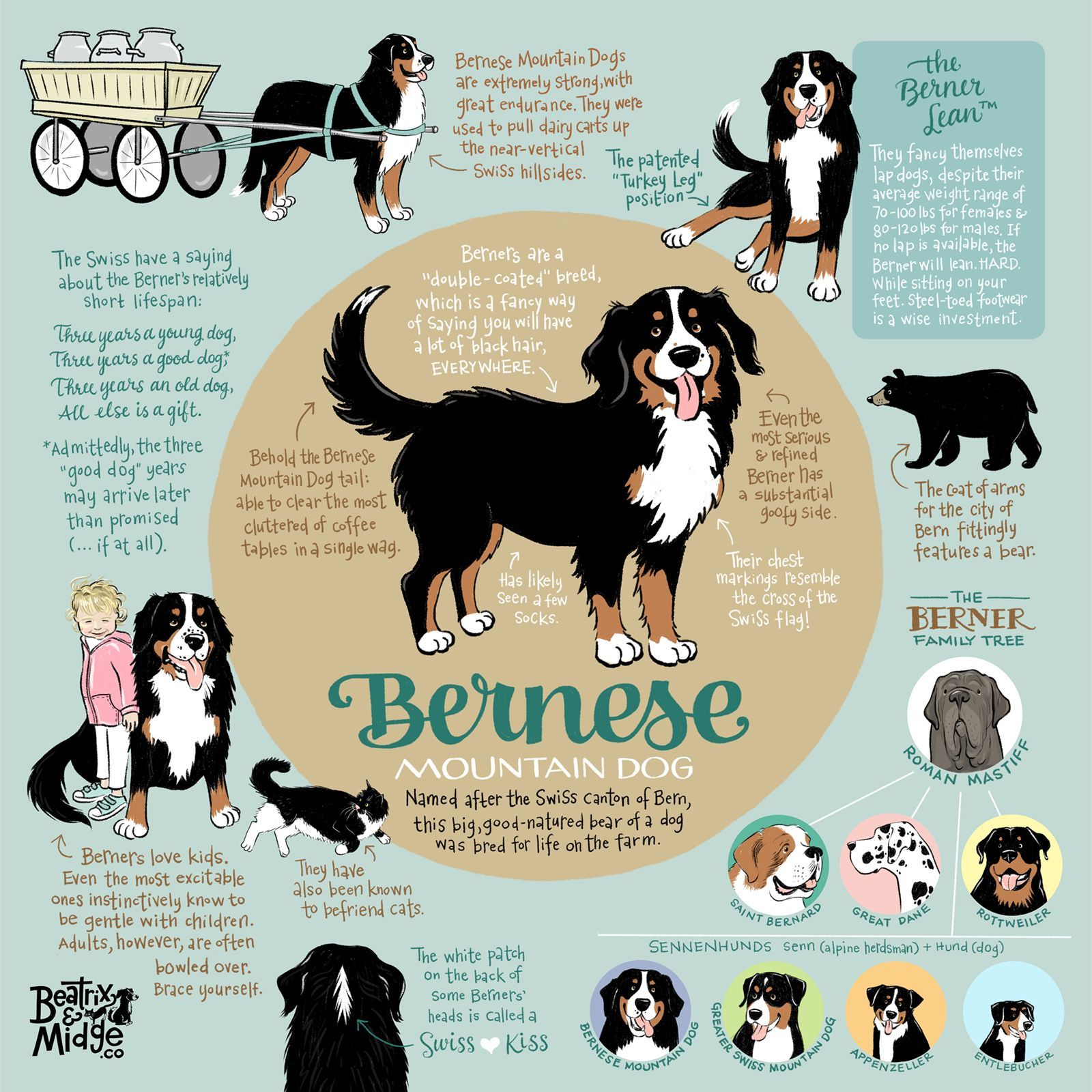 Veterinary Dental Treatments Dog Infographic Mountain Dogs