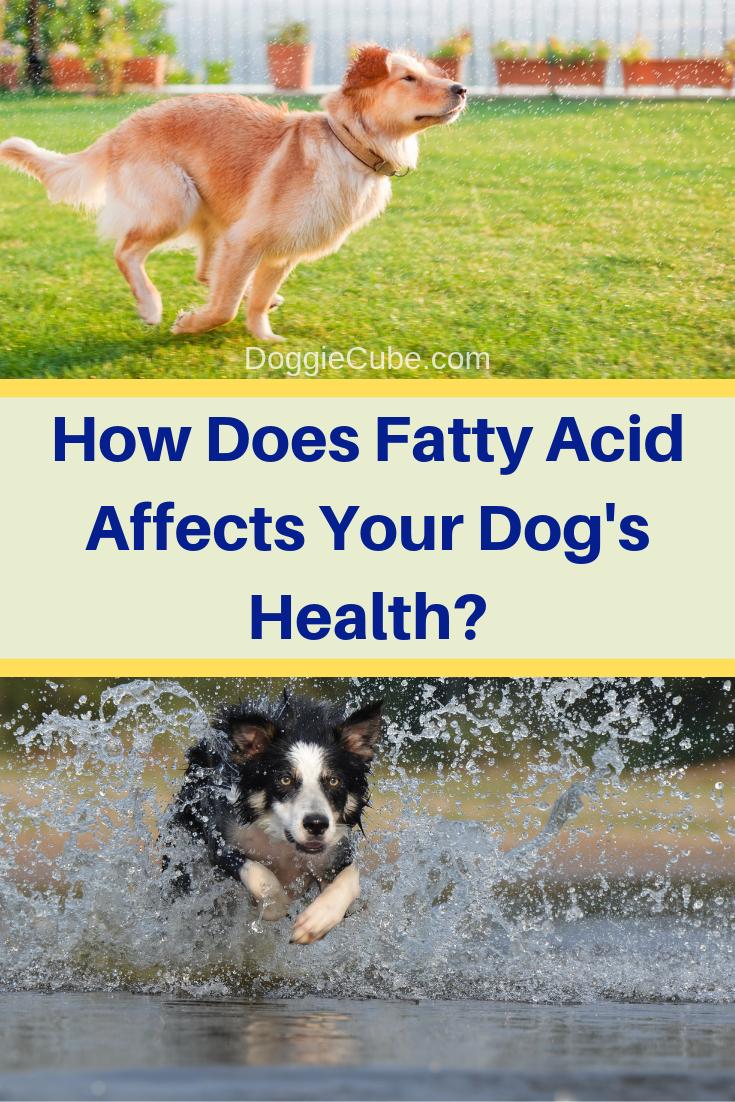 Pin On Dog Diet