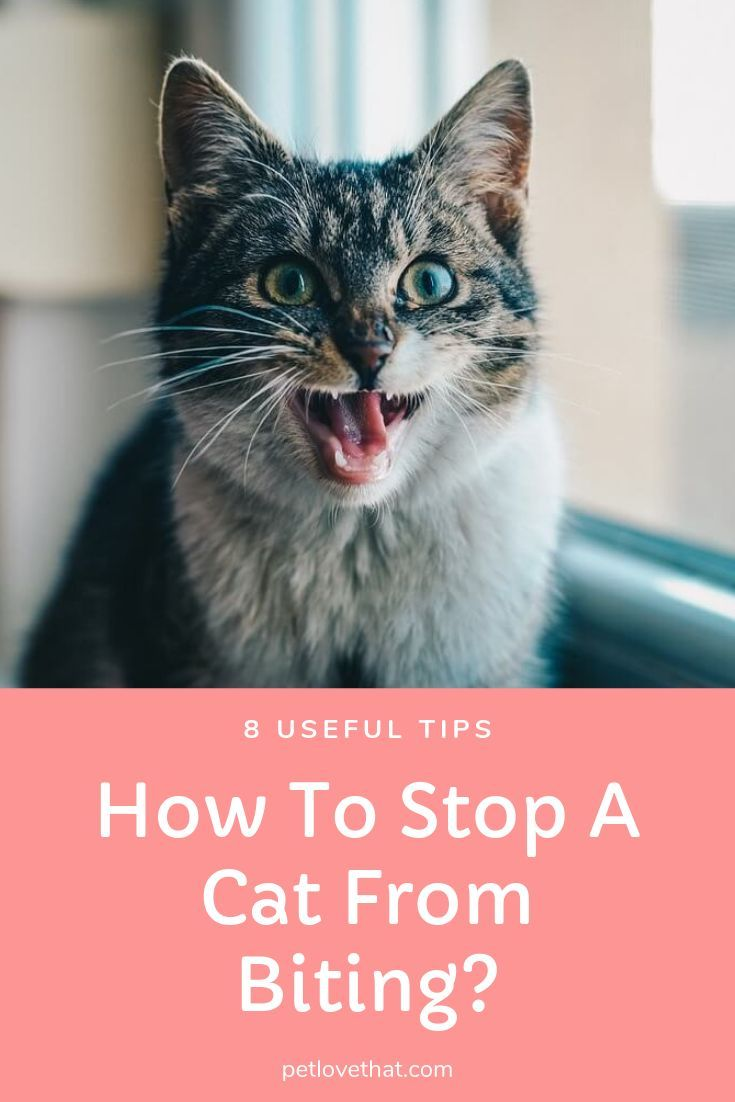 8 Useful Tips How To Stop A Cat From Biting (With images
