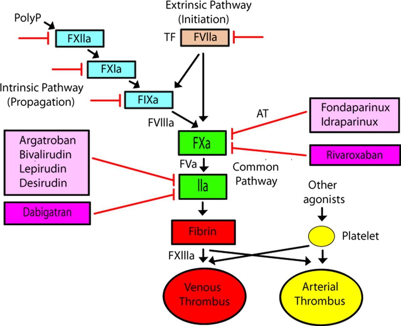 Arteriosclerosis Thrombosis And Vascular Biology Anticoagulant Thrombosis Vascular