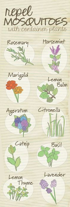 Get rid of the bug spray and repel mosquitoes naturally with these plants.