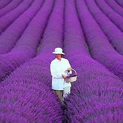 Adarl 200 pcs/bag French Provence Lavender Seeds Fragrant Organic Plant Home Garden Bonsai Flower Seeds
