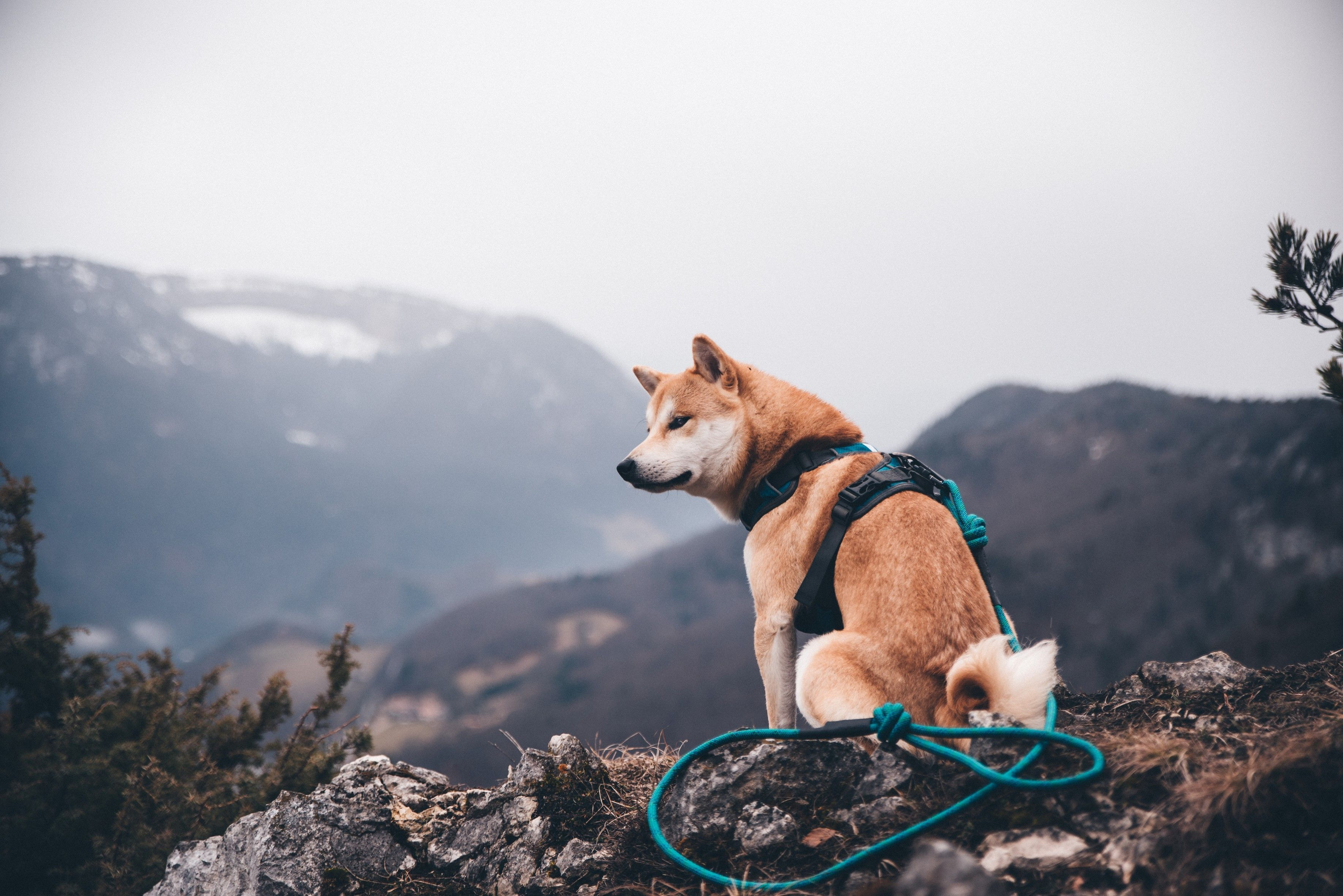 Adventure Dog Harness Dog Harness Dog Leash Dogs