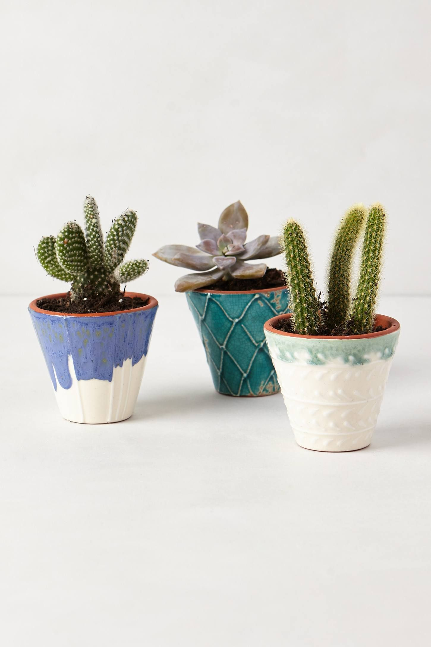 Cactus Planting Pots Handpainted Windowsill Pot Anthropologie Home