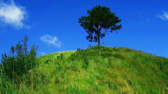 l haut sur la colline baguio philippines pinterest sur la colline les collines et. Black Bedroom Furniture Sets. Home Design Ideas