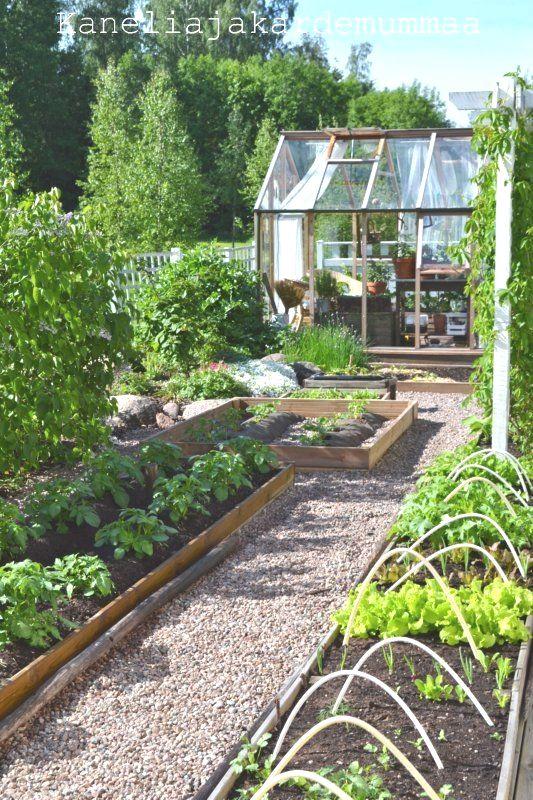 raised planter box vegetable garden gardening in 2020
