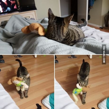 My Cat Lila Brings Her Doll To Bed With Her When I M Ready For Bed Each Night With Images Pretty Cats Cats Kittens And Puppies