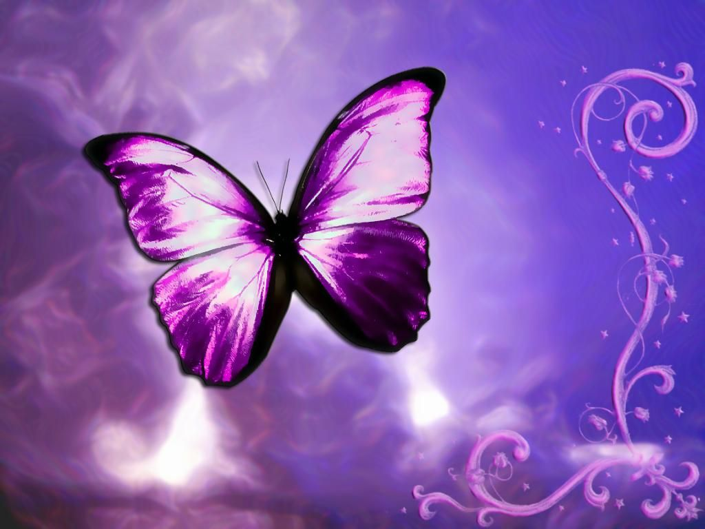 butterfly pictures | purple-fantasy-butterfly-postcard-hd-wallpaper ...