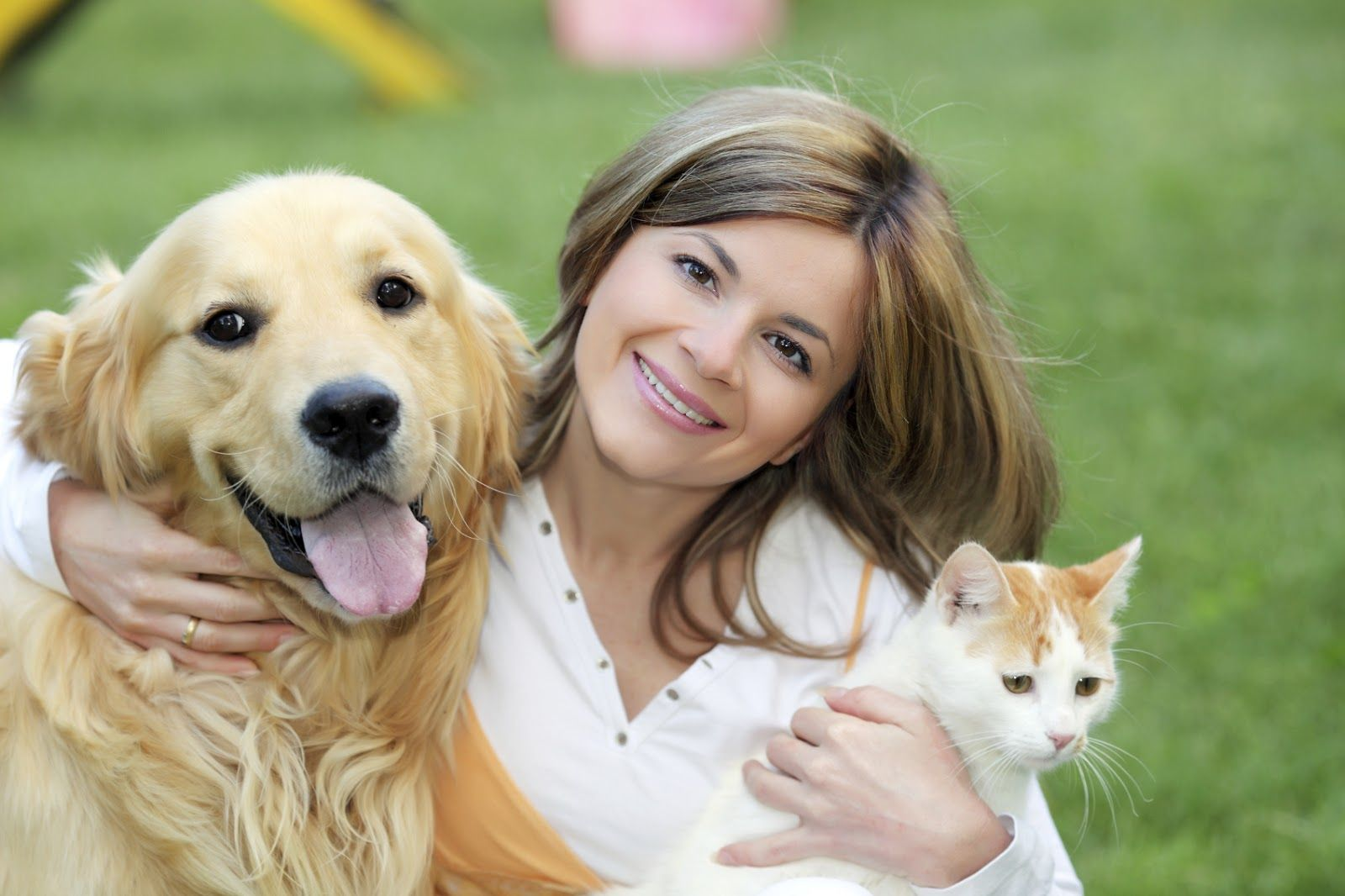 Pets Indoor Pets Dogs Happy Animals